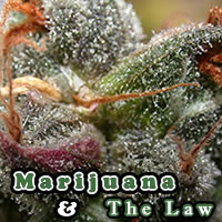 N.J. health officials give green light for Woodbridge dispensary to begin growing marijuana