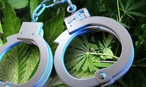 weed arrests