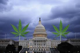 Legalization Takes Effect in D.C.
