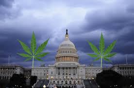 DC marijuana