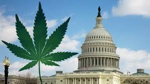 Washington, D.C. Marijuana
