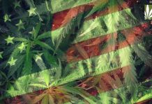 Marijuana in America