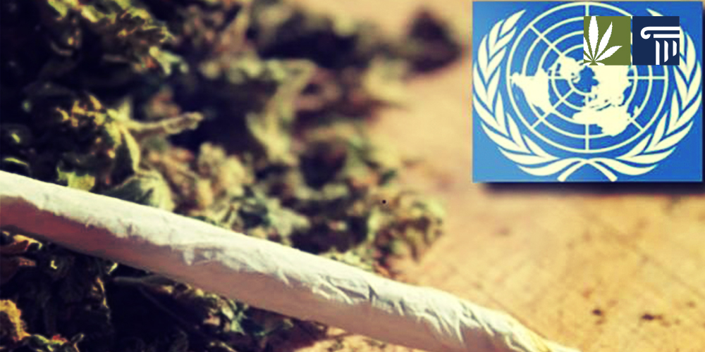 Marijuana United Nations