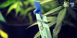 marijuana-tracking