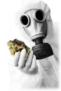 pesticides-marijuana