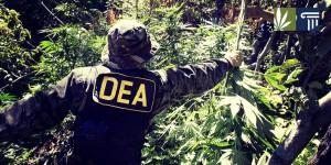 Cops raid illegal grow site