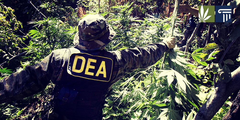 Cops raid illegal grow site