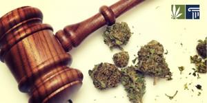 Marijuana Crime