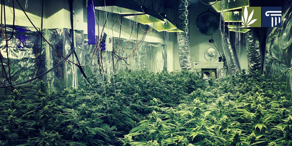 Оборудование выращивания в помещении 250