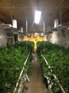 Marijuana Bust, Shasta County, California
