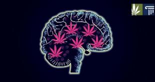 Marijuana Mood Disorders