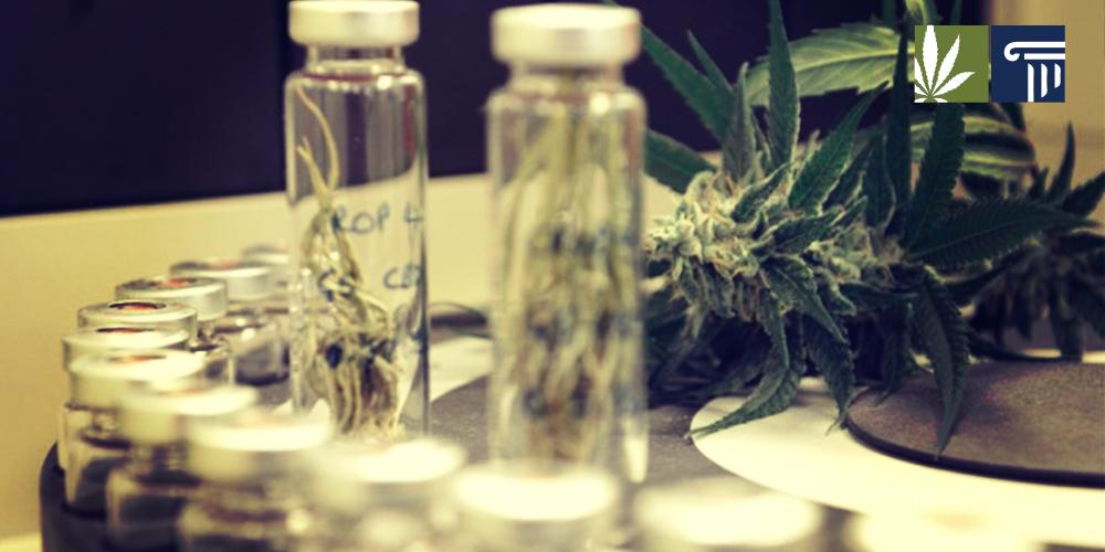 Marijuana as an anti-inflammatory