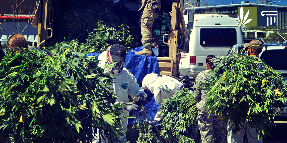 California marijuana raids