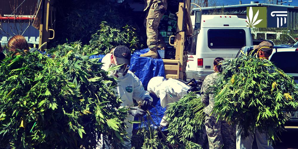 California marijuana raids