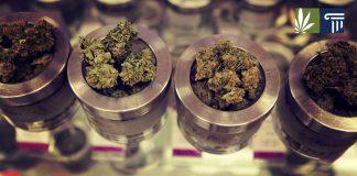 Legalization in Oregon