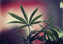Colorado campaign educates children on marijuana