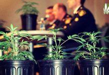 DEA marijuana