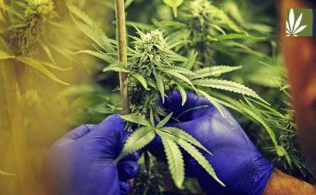 Michigan marijuana legalization