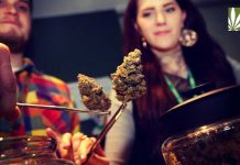 Marijuana Tasting Rooms