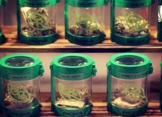 Massachusetts retail marijuana sales