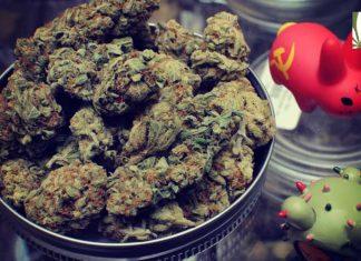DC popup marijuana markets