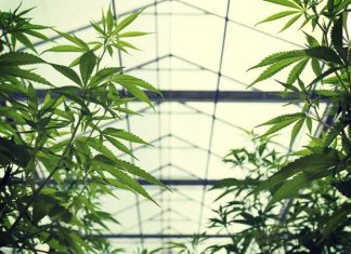 Massachusetts recreational marijuana law