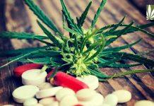 New York Medical Marijuana Opioid