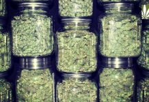 Oregon growing too much marijuana
