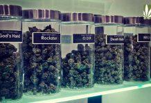 massachusetts-marijuana-regulators-demands-business