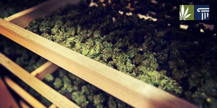 Alaska marijuana tax revenue increase