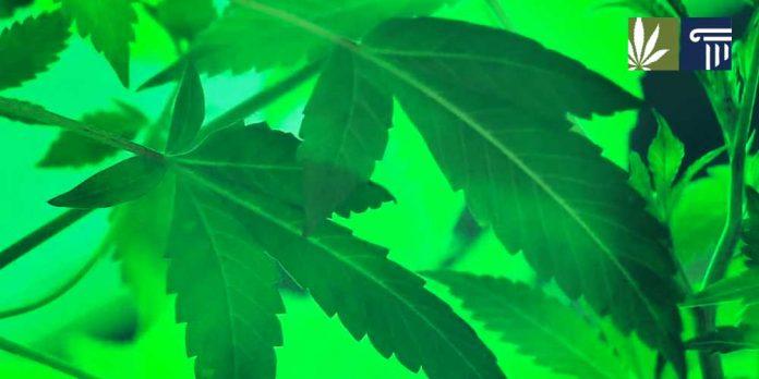 Oklahoma awards first medical marijuana patient licenses
