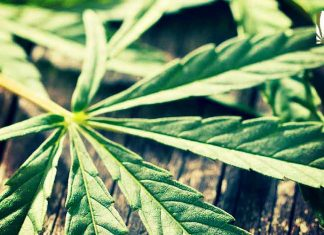Marijuana reform reaches Missouri, Michigan and Utah