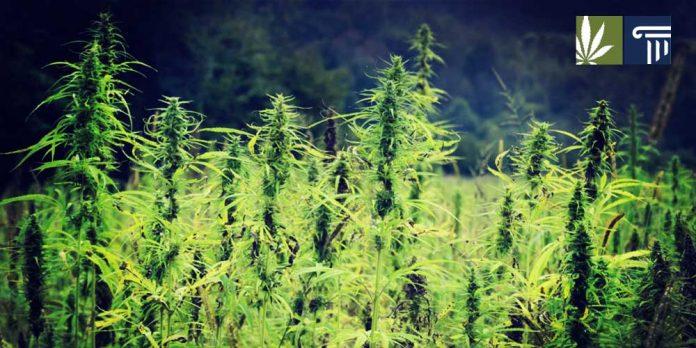 South Carolina Hemp Cultivation