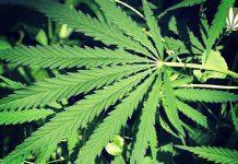 Virginia marijuana arrests on the rise