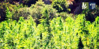 Hemp Legalization Farm Bill 2018