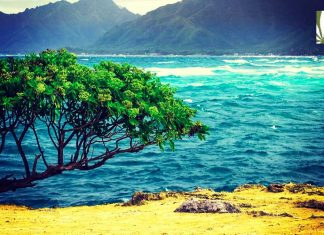 Hawaii legalization 2019