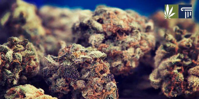 States likely to legalize marijuana 2019