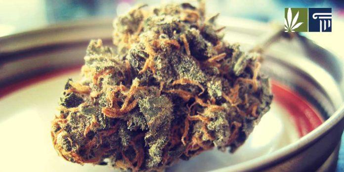 michigan marijuana gifting loophole