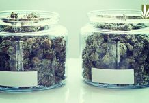 louisiana medical marijuana delay