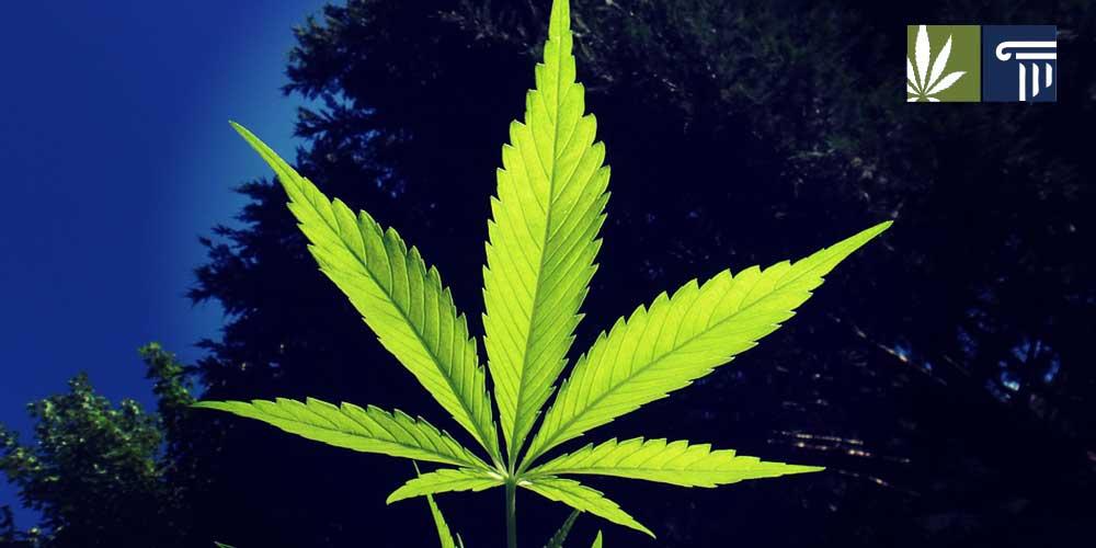 minnesota marijuana legalization bill introduced