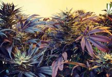 washington-introduces-home-cultivation-bill