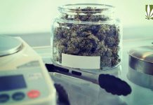 cannabis industry job creation