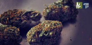 North Carolina legalize medical marijuana bill
