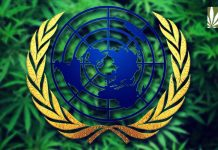 UN delays cannabis rescheduling recommendation WHO
