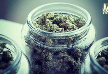 louisiana demands medical marijuana may 15