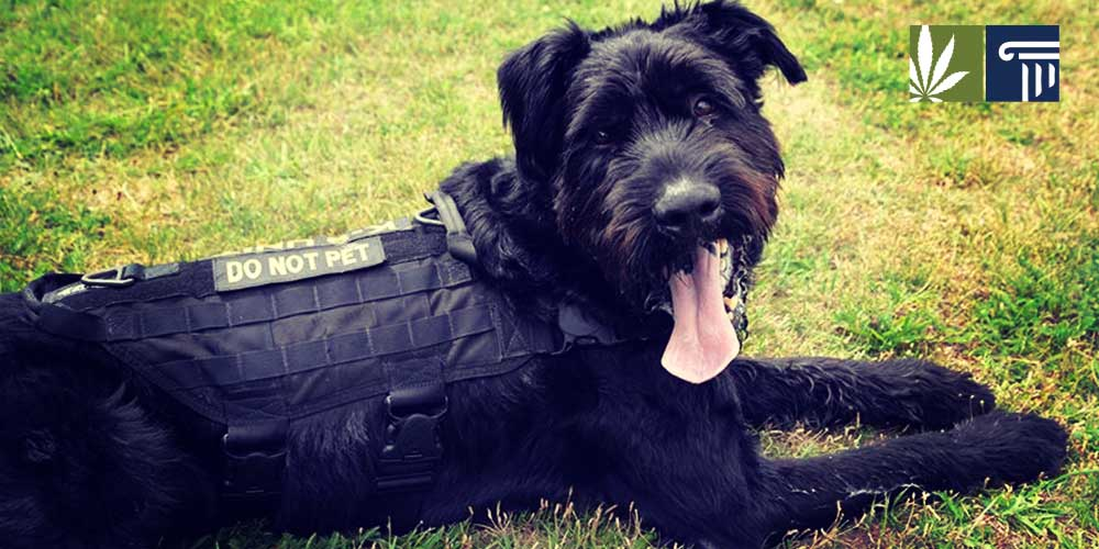 Pot-Sniffing Dogs Cannot Be Used Without Probable Cause
