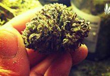 indiana marijuana smuggling
