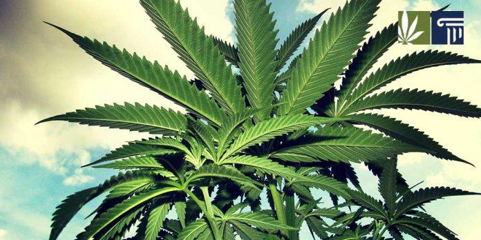 federal grant remove pesticides marijuana