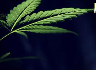 marijuana 1 to 3 act