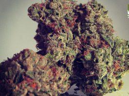 virginians want marijuana legalization